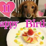 おめでとう!11歳のお誕生日、大好物がのったケーキでハッピーなダックスフンドちゃん♡