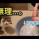 エキゾチックショートヘアちゃんがはじめてのお風呂でパニック〜!?