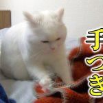 寝る前のふみふみタイム♡まるでパン生地をこねているみたいな職人気質な猫ちゃんwww
