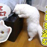 猫ちゃんがお部屋をウロウロ・・・一生懸命探していたのは大好きなアレ♡!