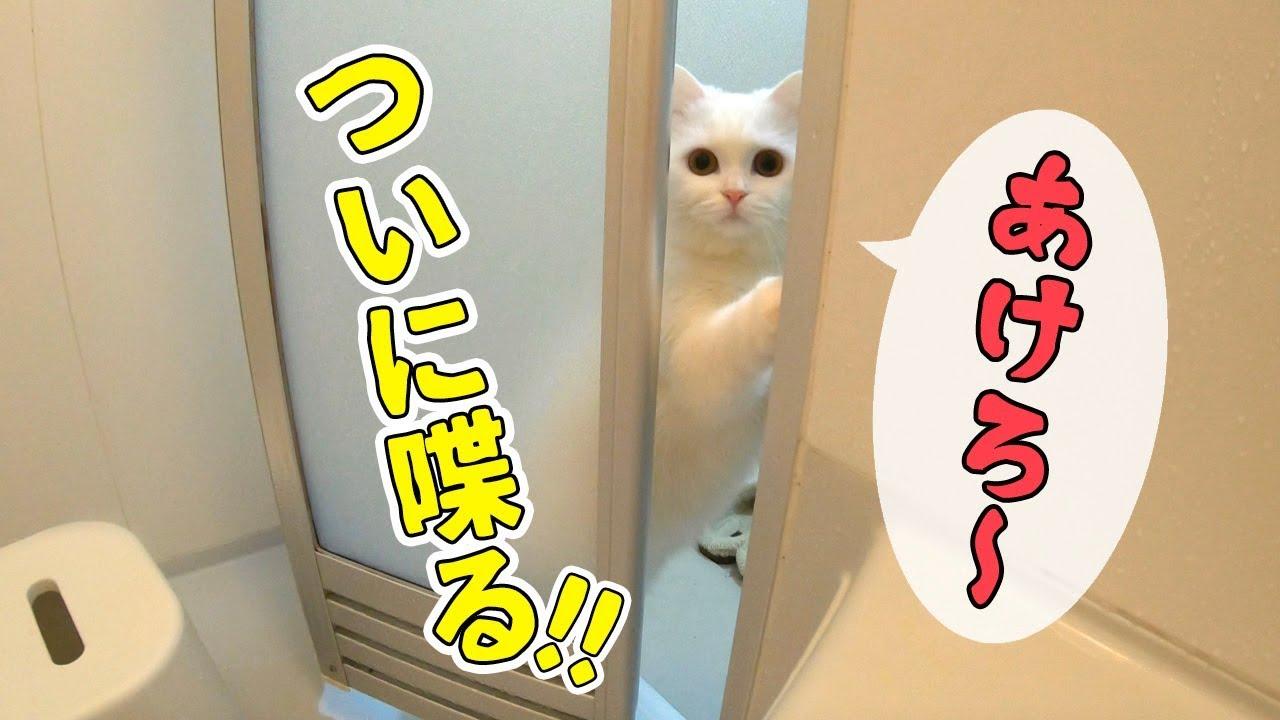 お風呂の外から可愛らしい声が・・・♡開けて〜?と鳴く猫ちゃん(*´ω`*)