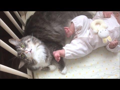 赤ちゃんのベッドで仲良くくつろぐノルウェージャンフォレストキャットちゃん♡