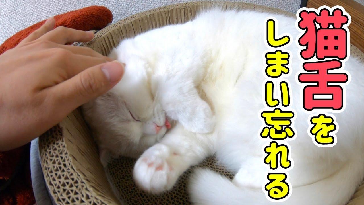 触りたい〜!猫ちゃんが舌を出したままおねんねしていたようです(*´ω`*)