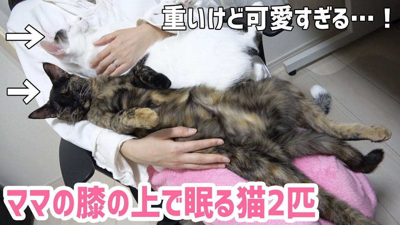 飼い主さんの上で2匹揃って寝始める猫ちゃんたちがかわいすぎる・・・♡
