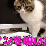 ワインの匂いにつられてきた猫ちゃん♡初めての香りはちょっぴり刺激的?(*´ω`*)