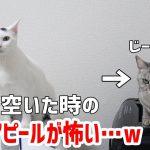 「お腹が空きましたにゃ〜・・・」無言の圧をかけてくる猫ちゃんたちがジワジワくる(*´ω`*)♡