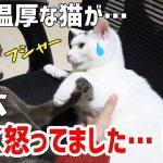 いつも静かな猫ちゃんほど怒ると怖い・・・?一触即発!猫ちゃんピンチ!!