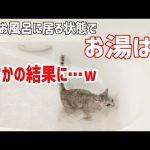 いきなり出るお湯にパニック!?お湯はりを眺めていた猫ちゃんたちにハプニングが・・・♡
