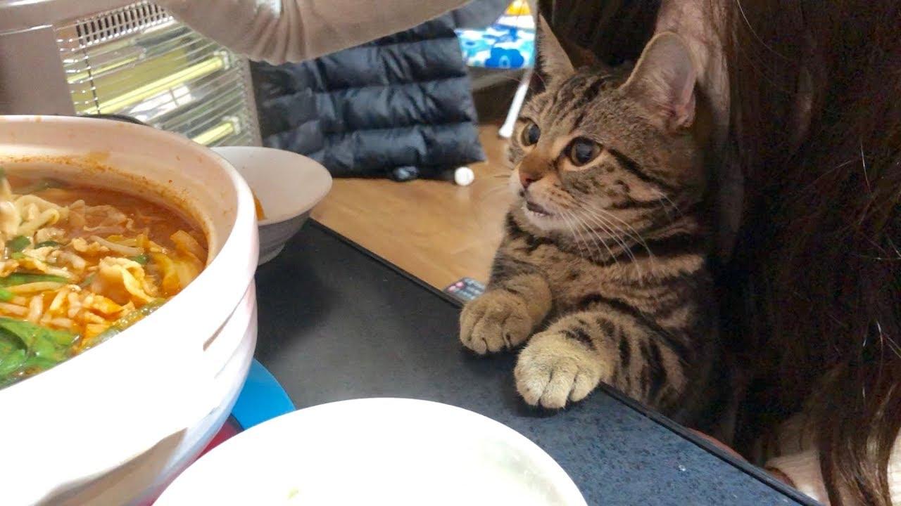 一緒にお鍋を食べたい猫ちゃんの表情が反則級にかわいすぎる・・・♡