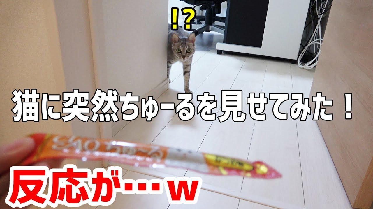 突然のチュールドッキリに動揺する猫ちゃんたちが可愛い♡