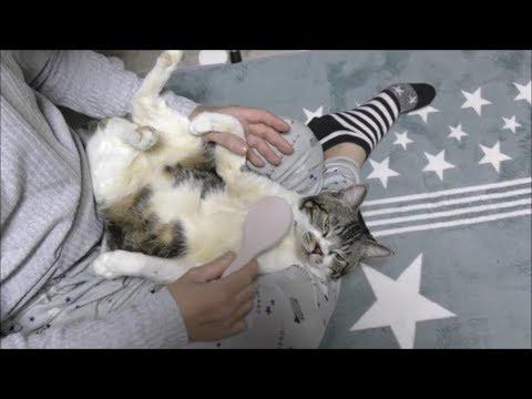 ゆるーい格好でブラッシングされる猫ちゃんに思わずほっこりしちゃう♡