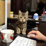 パソコン作業中にやってきた猫ちゃんがミルクにそーっと手を伸ばして・・・?♡