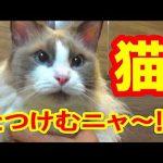猫ちゃんの可愛い抗議に思わずニヤニヤしちゃう・・・♡