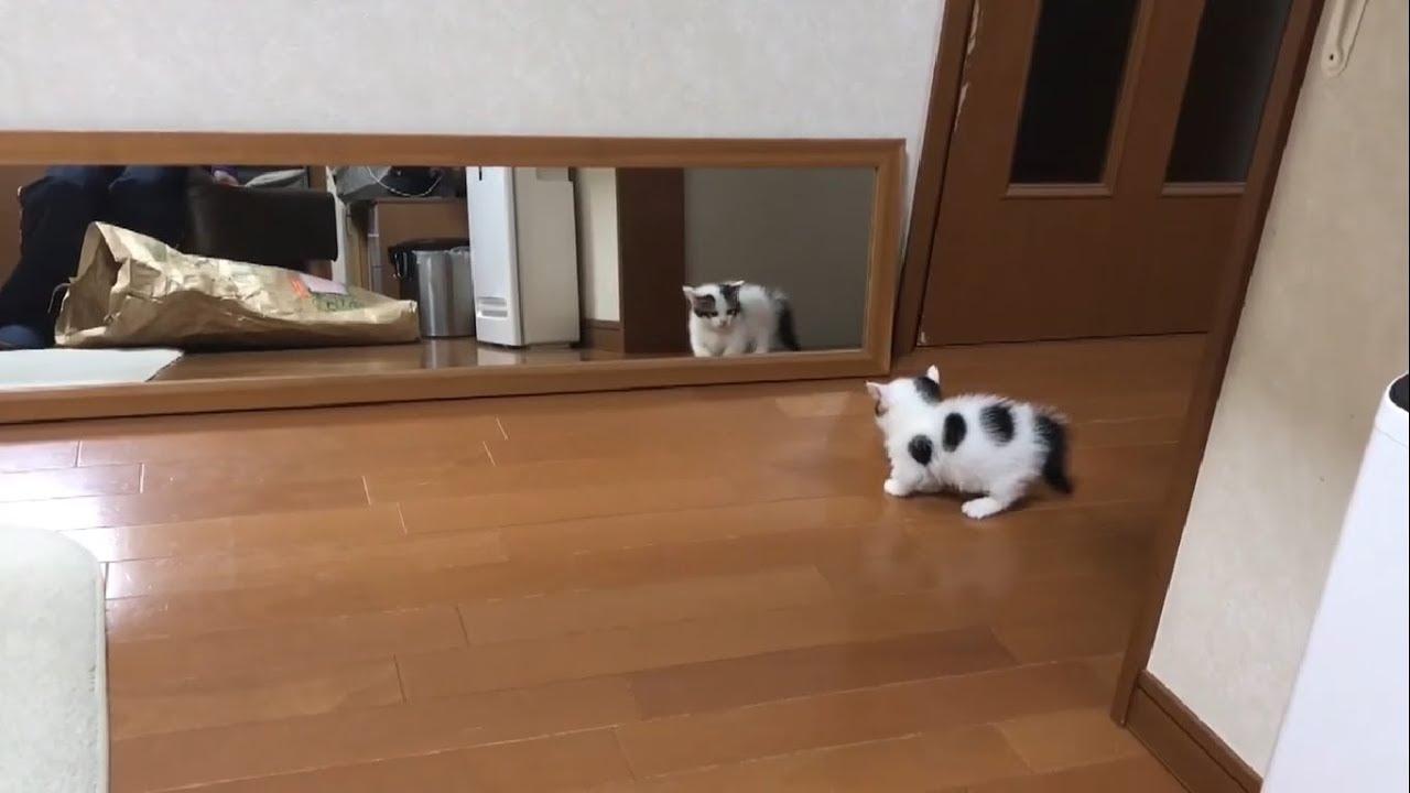 子猫ちゃんたちが鏡に映る自分の姿にビックリする姿が可愛すぎる〜♡
