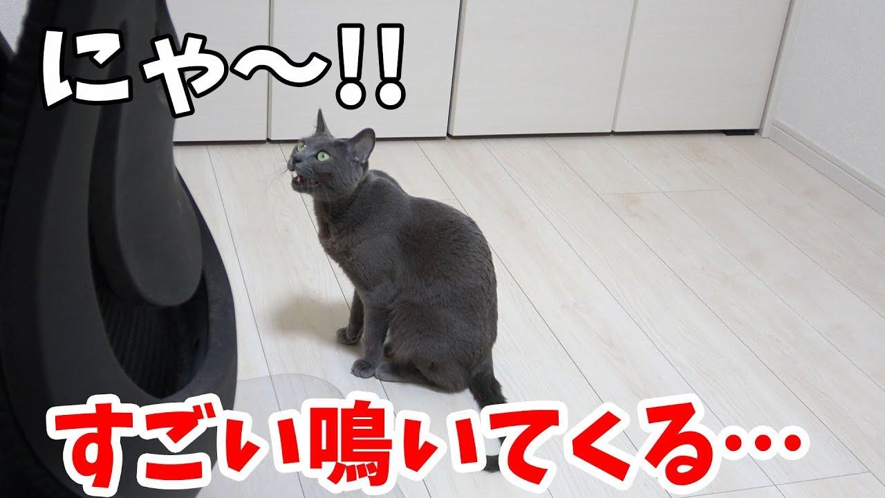 なんて言ってるの〜!?一生懸命鳴いて訴える猫ちゃん(´・ω・`)