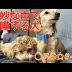 みんなは聞き取れる~!? 奇妙な声で喧嘩をする犬の姉弟動画(´・ω・`)