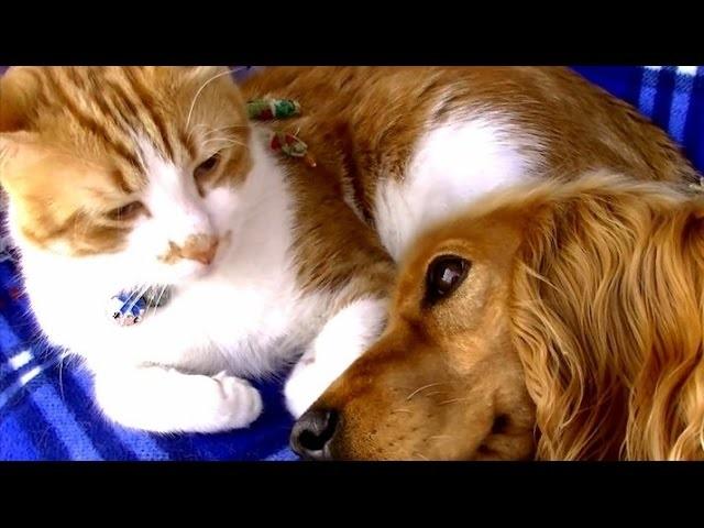 ワンちゃんとネコちゃんの絆の物語°˖✧