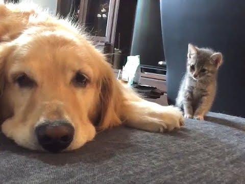 ワンちゃんと仲良くなりたいと一歩踏み出したネコちゃんの動画°˖✧