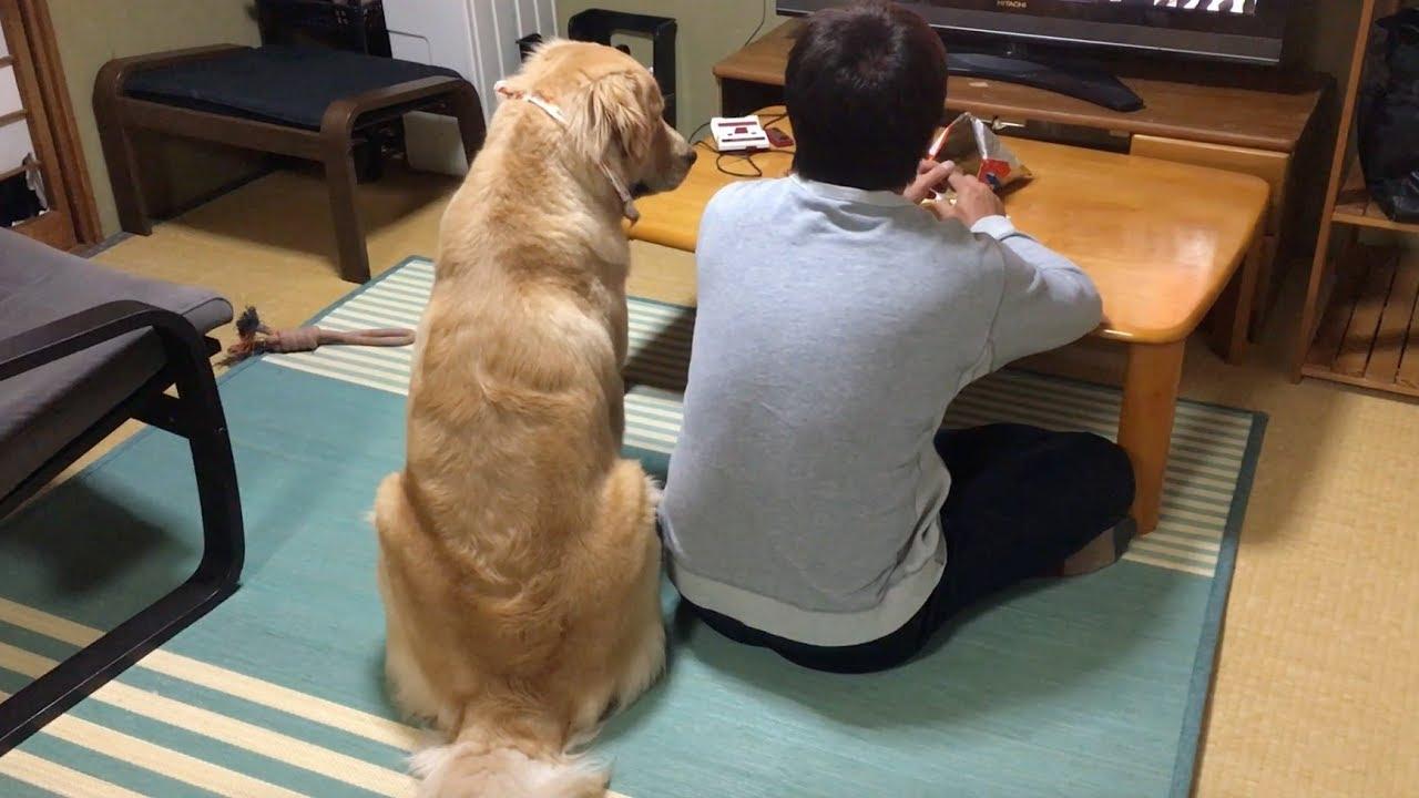 絡むパパとおとなしくのってあげるワンちゃんのほっこり動画