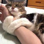 飼い主さんの腕につかまって離そうとしないネコちゃんがかわいすぎる