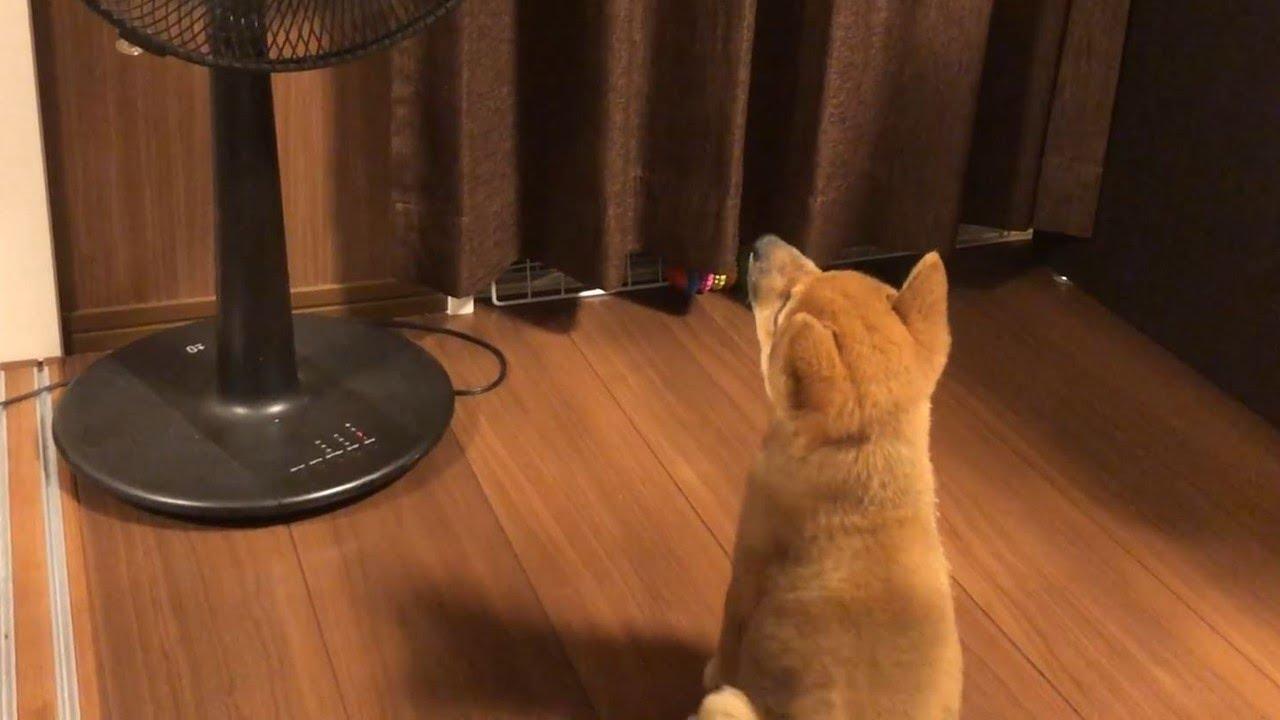 扇風機と初対面したワンちゃん。その反応はいかに…