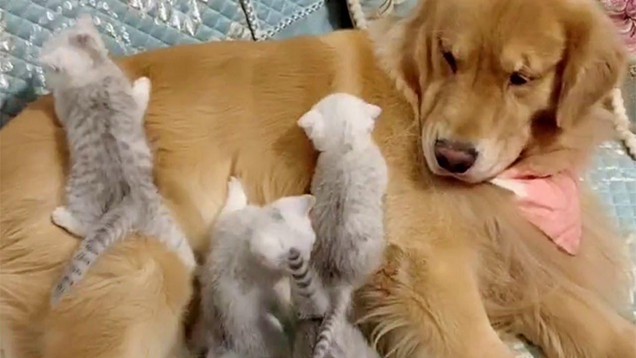生まれたばかりのかわいい子ネコたちとそれを見守るワンちゃん