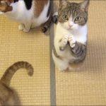 ネコのかわいいおねだりに悶絶♡