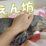 飼い主さんと布団の中に入りたい子猫ちゃんにキュン♡
