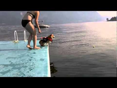 水になかなか飛び込めないワンちゃん。勇気を出して飛び込んだそのフォームに注目!!