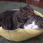 仲良しネコちゃんたちのひと時