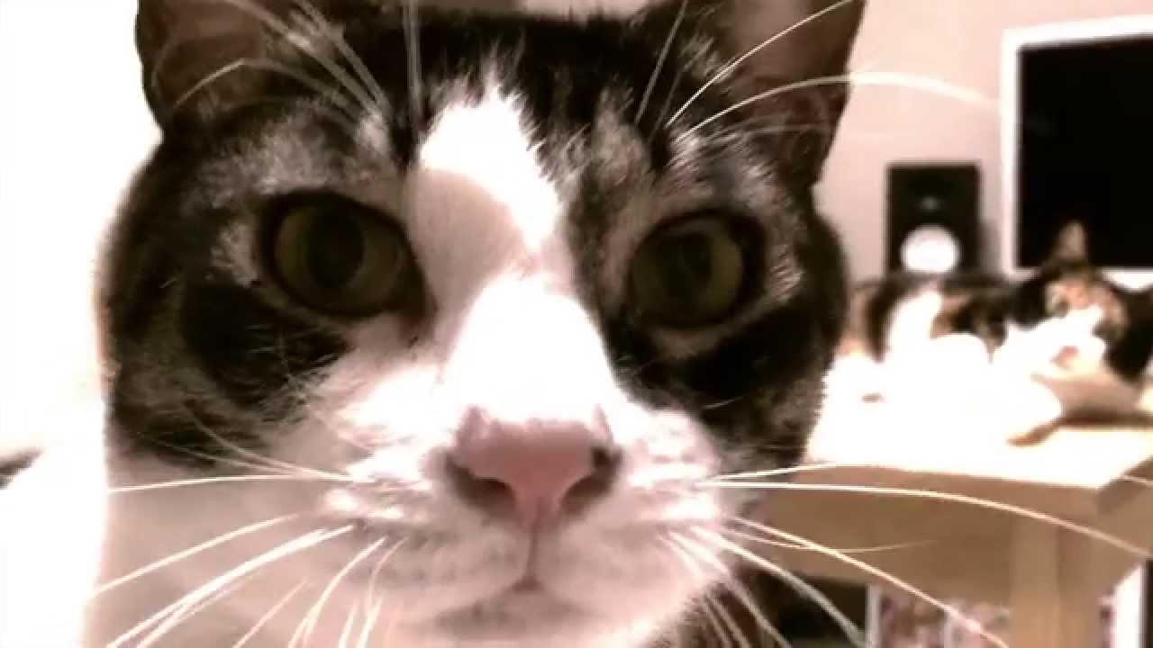飼い主さんと遊んでいる時のネコちゃんの表情に注目!そして衝撃のラスト、、、!