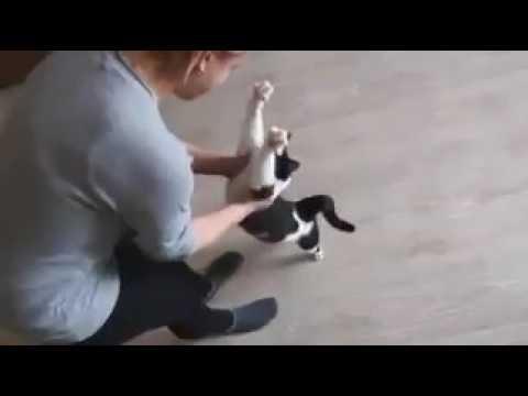ネコちゃんの抱っこの要求がかわいすぎる♡