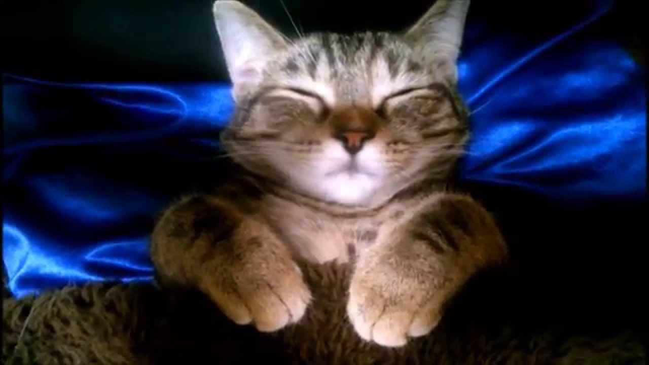 こたつで寝ているネコちゃん。その寝姿はまさに天使♡