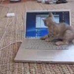 ネコちゃん、Macに戦いを挑む
