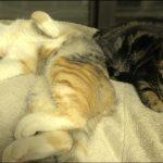 寝言を言うネコちゃんとそれを不思議そうに見るネコちゃん