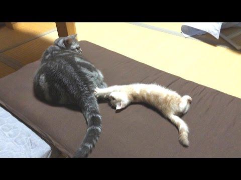 かまってほしい子ネコと無視する先輩ネコ。そのやり取りがかわいい♡