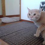 ネコの置物に驚きを隠せないネコちゃんのリアクションに注目!!