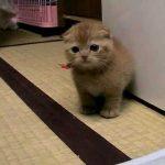 好奇心旺盛な子ネコちゃんの天真爛漫っぷりをご覧あれ!