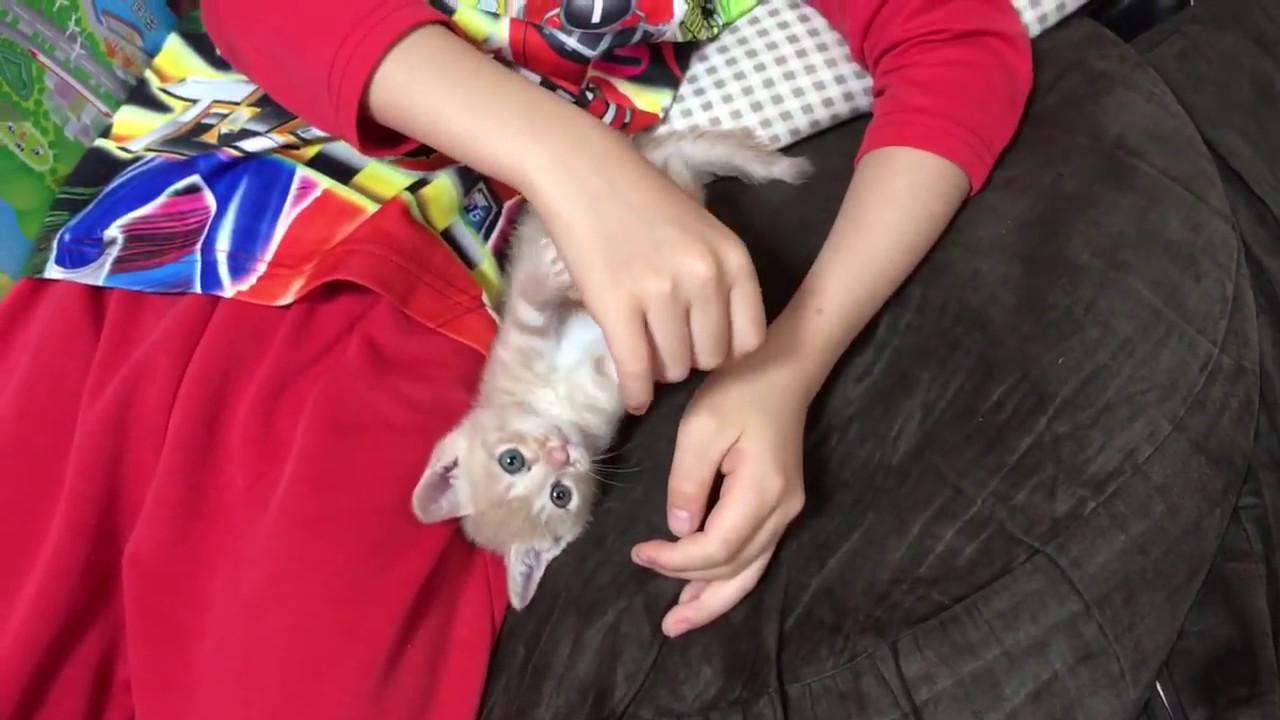 「もうねむいにゃ」遊び疲れて寝てしまうネコちゃんが可愛すぎる♡
