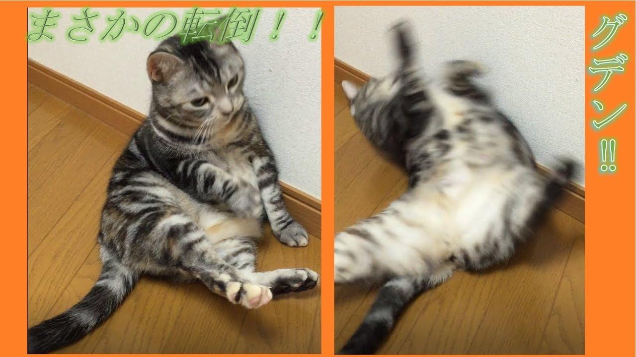 後ろにコテン°˖✧☆倒れるネコちゃん