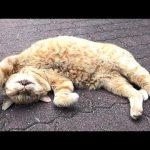 眠っている時の前足の動きが面白いネコちゃん