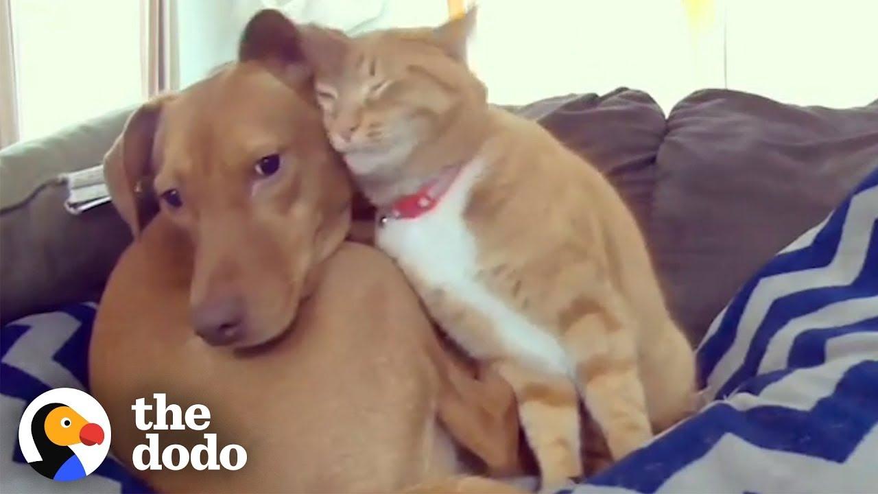 落ち込むワンちゃんを慰めるネコちゃん。2匹の絆に感動!