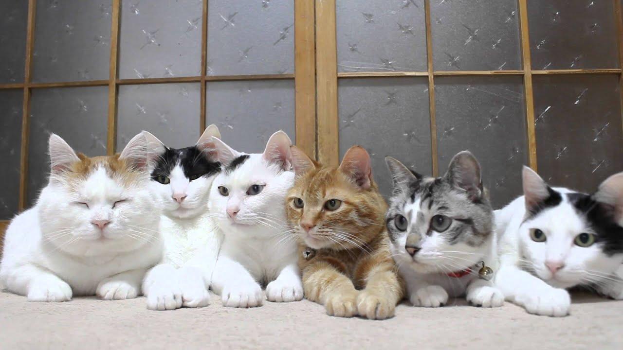 首を振るネコたちと目をつむって微動だにしないネコ
