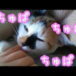 こうすると安心するにゃ!飼い主さんの指をちゅぱちゅぱする子ネコ