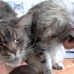 飼い主さんのなでなでが気持ち良くて顔を傾けてしまうネコちゃんたち