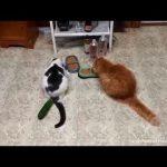 【必見】とにかくビックリする猫ちゃんたち!