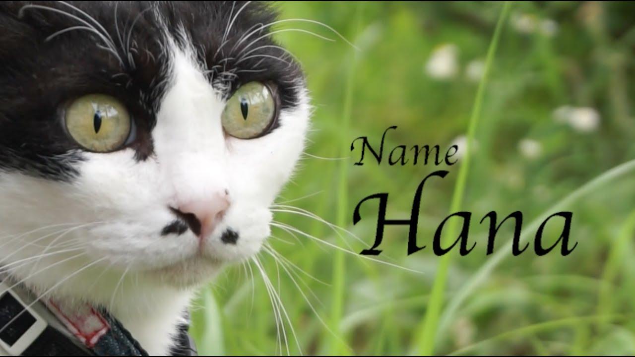 若々しい11歳の猫が優雅に雑草を食べる姿♪