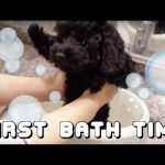 初めてのお風呂にきょとんとするワンコ