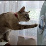 夏の風物詩?扇風機で目が回るネコが話題に!!