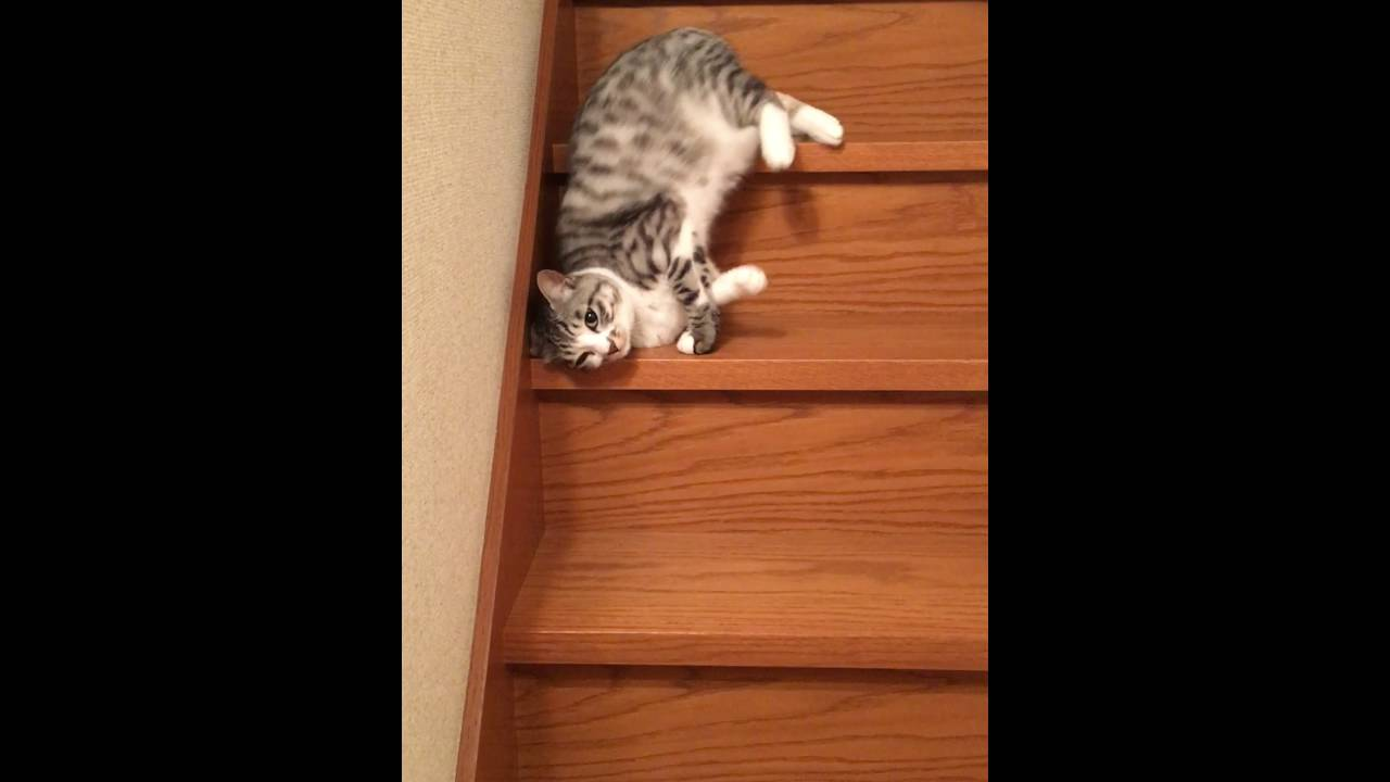 階段を降り…落ちていくネコちゃん!?
